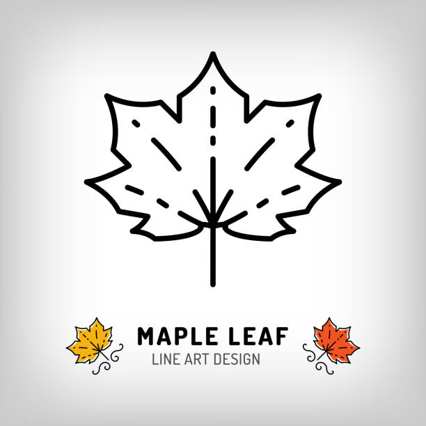 Best Maple Leaf Illustrations, Royalty-Free Vector Graphics