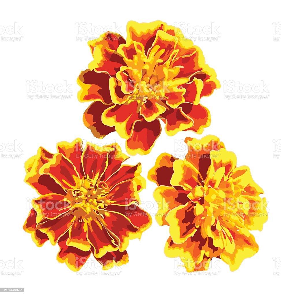 vector marigolds vector marigolds – cliparts vectoriels et plus d'images de beauté libre de droits