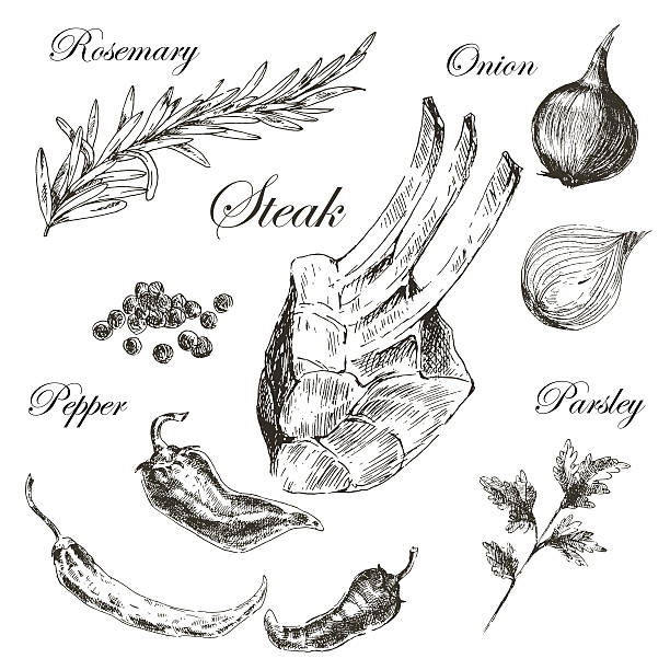 vector meat steak sketch drawing designer template. food hand-drawn vector art illustration