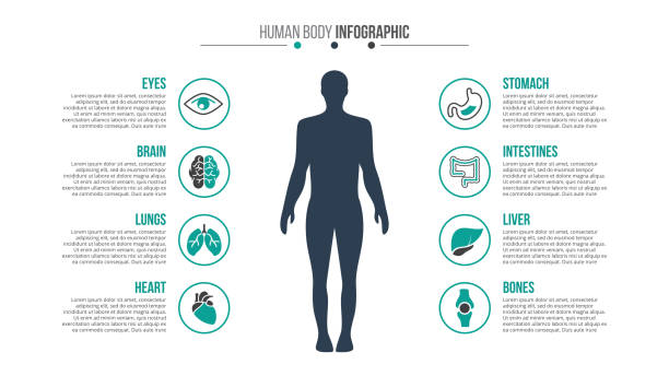 Vector medical and healthcare infographic. Vector human body infographic. Medical and healthcare template for presentation with 8 steps, options, parts or processes. the human body stock illustrations