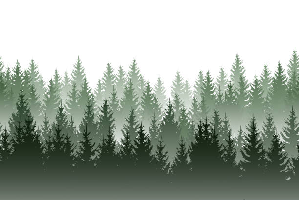 vector misty green forest isolated on white background - mountains in mist stock illustrations
