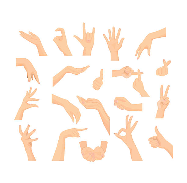 vector mix set of beautiful woman's hand isolated on white - 女性 手点のイラスト素材/クリップアート素材/マンガ素材/アイコン素材