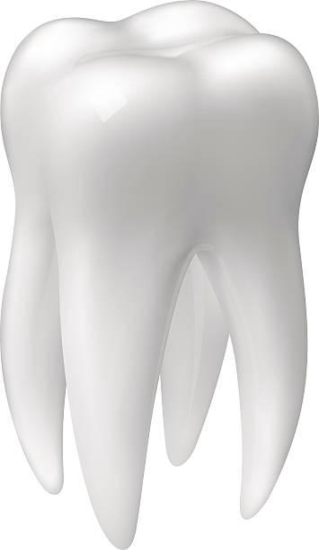 bildbanksillustrationer, clip art samt tecknat material och ikoner med vector molar tooth icon - molar