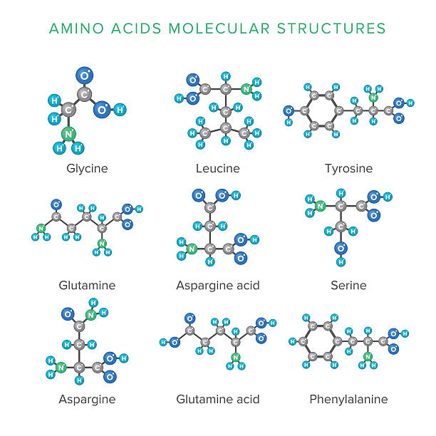 Vector molecular structures of amino acids isolated on white set Vector molecular structures of amino acids isolated on white set amino acid stock illustrations