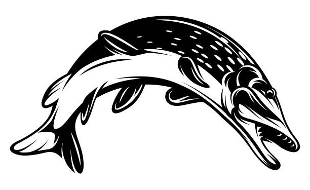 monochrome vektorgrafik mit einem hecht für design zu einem thema fischerei - seehecht stock-grafiken, -clipart, -cartoons und -symbole