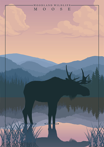 vector mountain in woodland with lake and moose