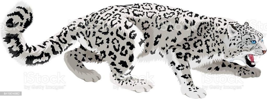 royalty free amur leopard clip art vector images illustrations rh istockphoto com snow leopard face clipart snow leopard clip art free