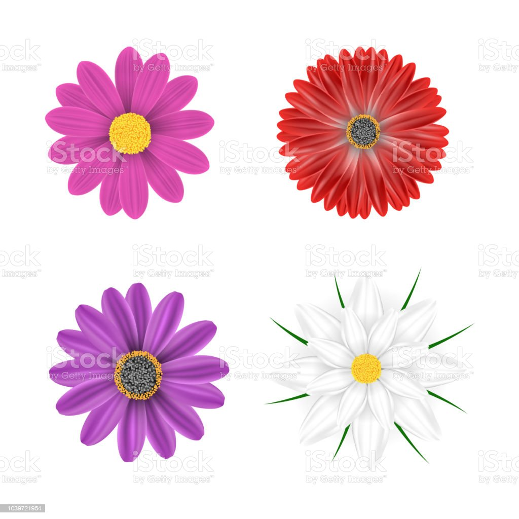 Vector Multicolored Flowers On A White Background Stock Vector Art