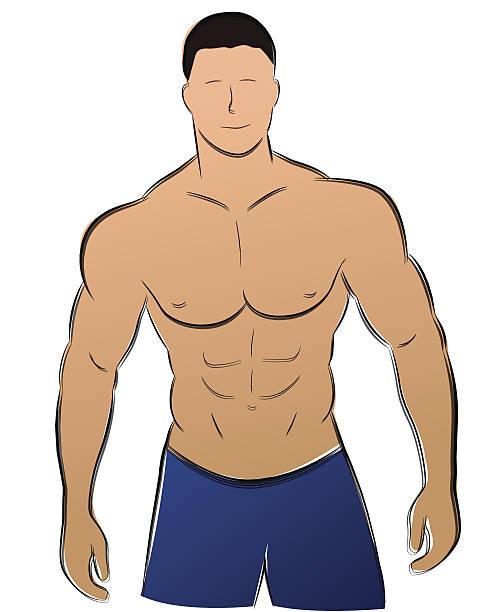 ilustrações de stock, clip art, desenhos animados e ícones de vector homem músculo - tronco nu