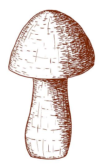 Vector mushroom in strokes