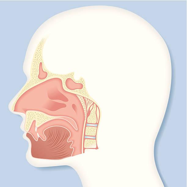 Royalty Free Nasal Septum Clip Art, Vector Images & Illustrations ...