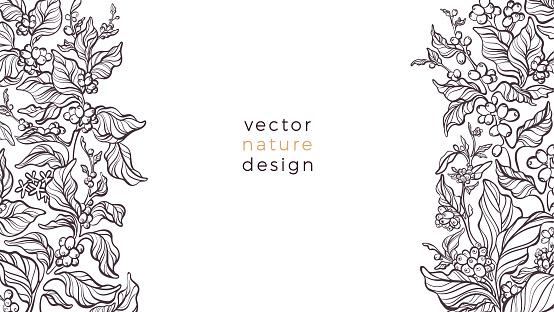Vector nature border. Coffee plant Art bio pattern