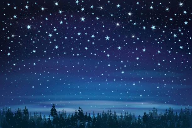 stockillustraties, clipart, cartoons en iconen met vector nacht hemel en bos achtergrond. - twilight