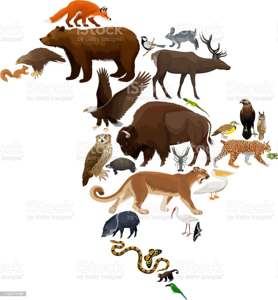 Vector North America fauna map, flat elements. Animals, birds,...
