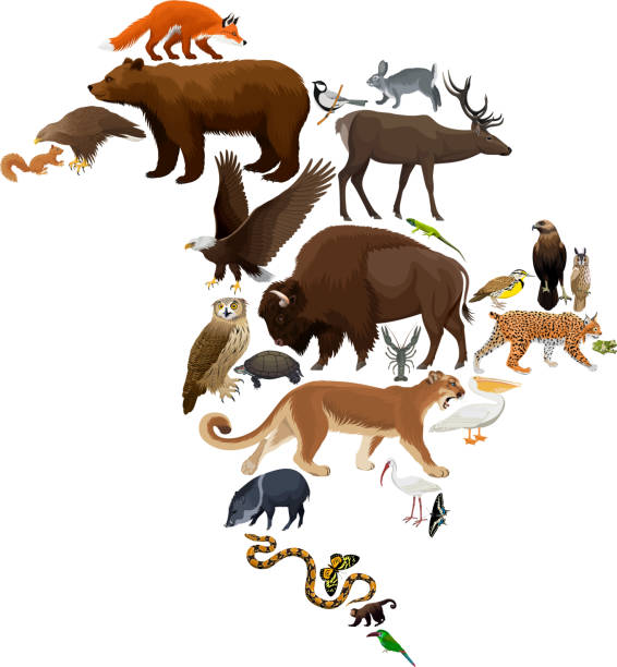 vector north america fauna map, flat elements. animals, birds, reptiles, insects and amphibian big set. geography infographic illustration - javelina stock illustrations