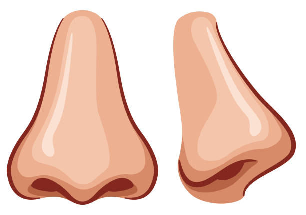vector nose on white background - nos stock illustrations