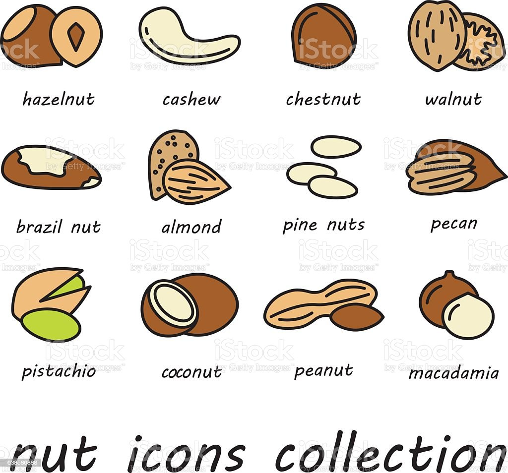 vector nut icons collection vector art illustration