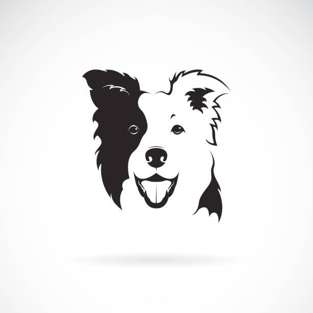 Vector of a border collie dog on white background. Pet. Animal. Dog logo or icon. Easy editable layered vector illustration. Vector of a border collie dog on white background. Pet. Animal. Dog logo or icon. Easy editable layered vector illustration. sheepdog stock illustrations