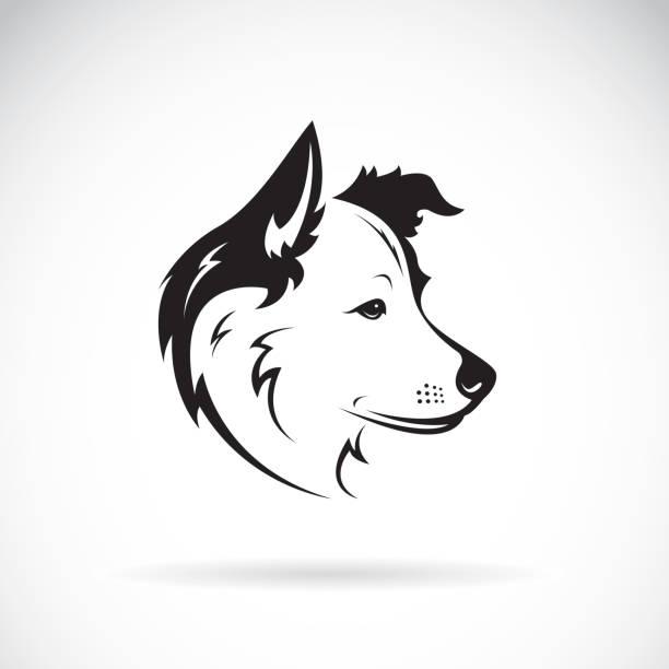 vektor von einem border collie hund auf weißem hintergrund. pet-tier. - collie stock-grafiken, -clipart, -cartoons und -symbole