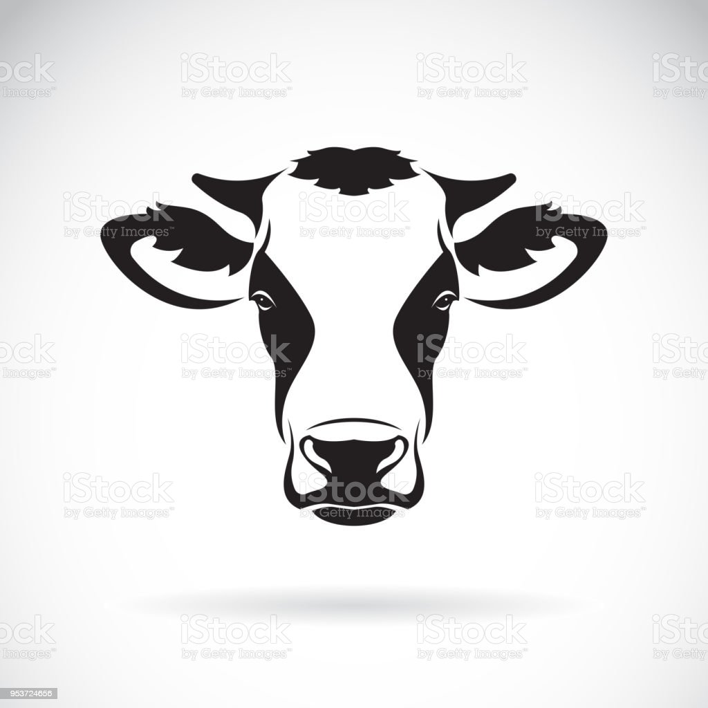 royalty free cow face pose clip art vector images illustrations rh istockphoto com cow face silhouette clip art cow face clip art vintage