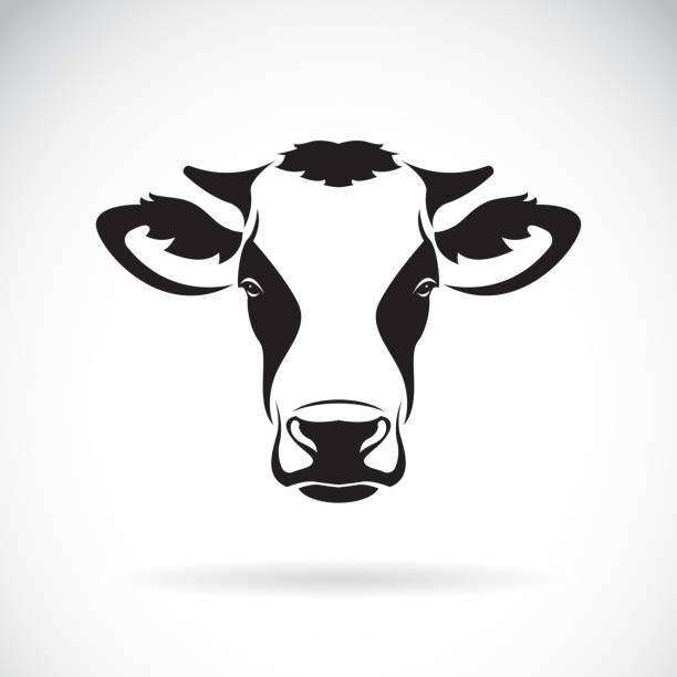 vector of a cow head design on white background. farm animal. easy editable layered vector illustration. - cow stock illustrations, clip art, cartoons, & icons