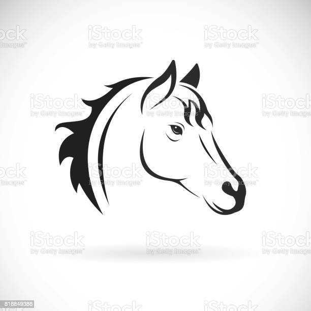 Vector of a horse head on white background wild animal vector id818849388?b=1&k=6&m=818849388&s=612x612&h=i5j4si2e3eljwbr6lf3hdxhynt3gfq4u9ffzojekfu0=