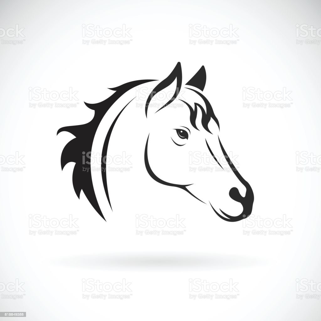 Vector of a horse head on white background. Wild Animal vector art illustration