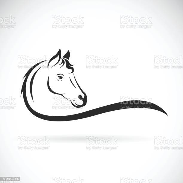 Vector of a horse head on white background wild animal vector id825443960?b=1&k=6&m=825443960&s=612x612&h=pjv1 lmyxmlxderrztp06ob3ajmgrvlckzddjvofyuu=