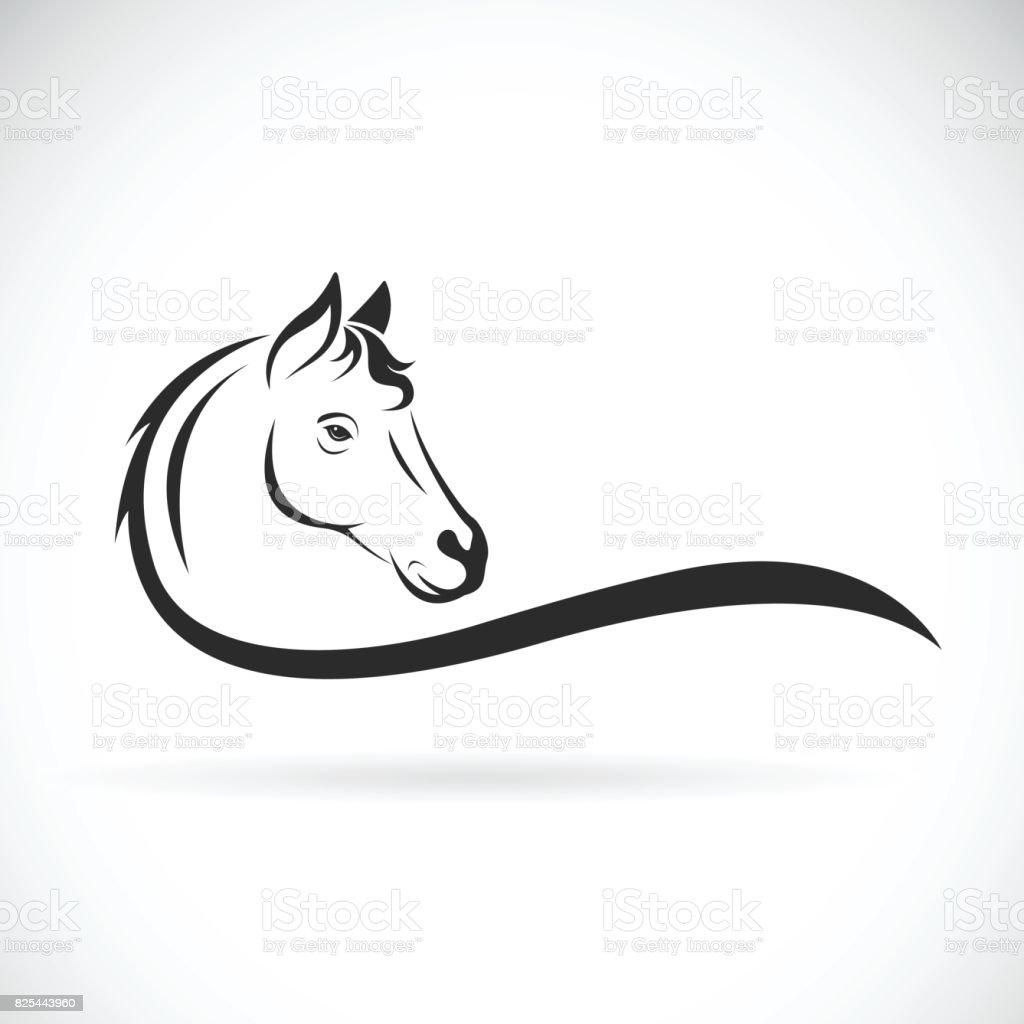 Vector de una cabeza de caballo sobre fondo blanco. Animal salvaje - ilustración de arte vectorial