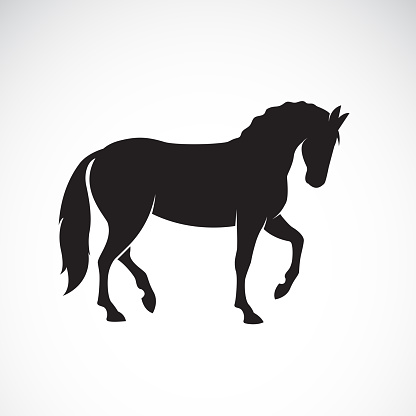 Vector of a horse isolated on white background. Wild Animals. Easy editable layered vector illustration.