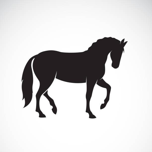ilustraciones, imágenes clip art, dibujos animados e iconos de stock de vector de caballo aislado en fondo blanco. animales salvajes. ilustración vectorial capas editable fácil. - caballo