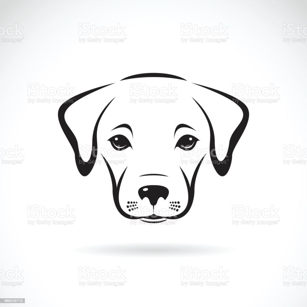Vector Of A Labrador Puppy Face On White Background Dog Pet Stock Illustration Download Image Now Istock