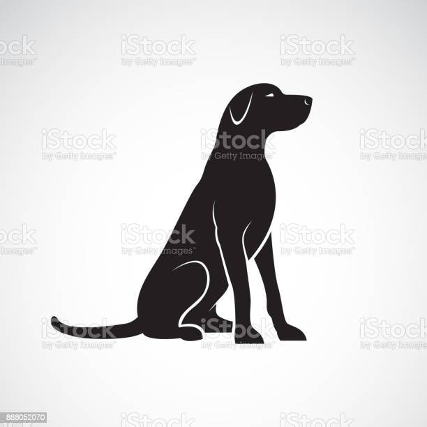 Vector of a labrador retriever dog isolated on a white background pet vector id888052070?b=1&k=6&m=888052070&s=612x612&h=7ijxchxp22mm6oilzg 2r8lbqsupsexcwwwklyy3bwk=