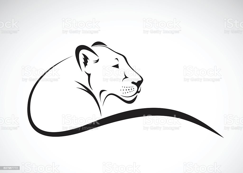 Line Art Design Vector : Royalty free lioness clip art vector images illustrations istock