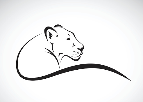 Vector of a lion female design on white background.