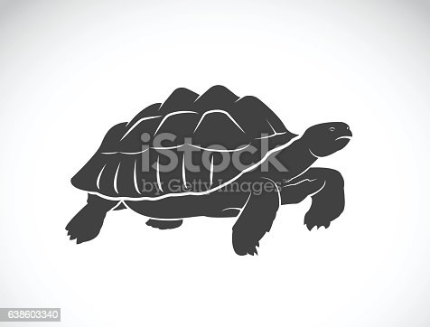 Vector of a turtle on white background. Reptile. Wild Animals. (Geochelone sulcata)