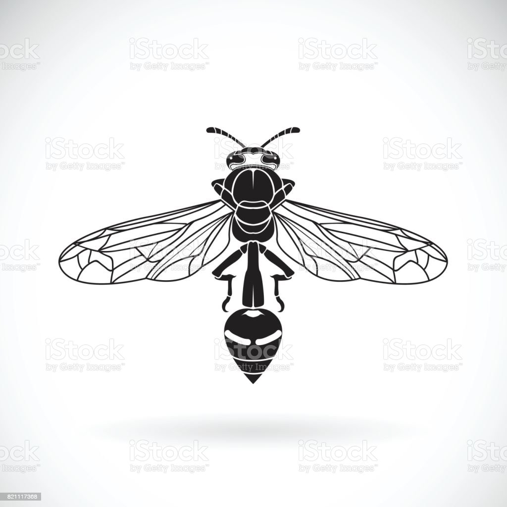 Vector of a wasp on a white background. Insect Animal vector art illustration