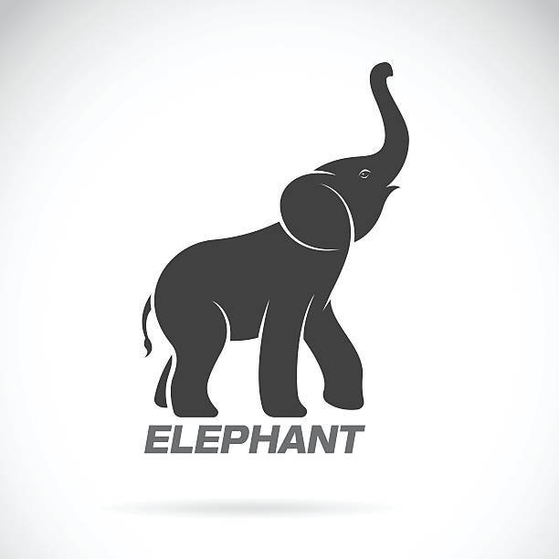 vector of an elephant design on a white background. - elephant stock illustrations