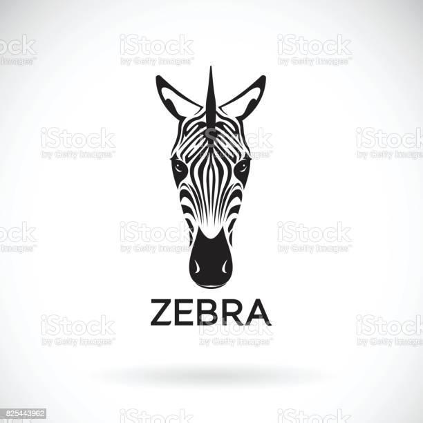 Vector of an zebra face on white background wild animals vector id825443962?b=1&k=6&m=825443962&s=612x612&h=odhnrhhpdubkv0m8mjxc mflzrrkjiizyzpsuz6ynx8=
