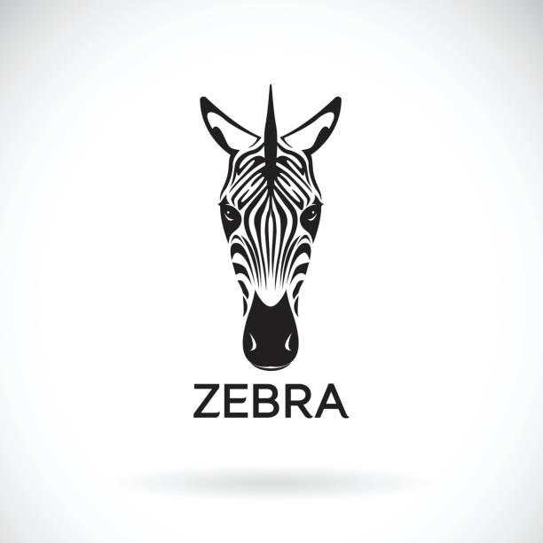 vektor von einem zebra-gesicht auf weißem hintergrund. wilde tiere. - zebras stock-grafiken, -clipart, -cartoons und -symbole