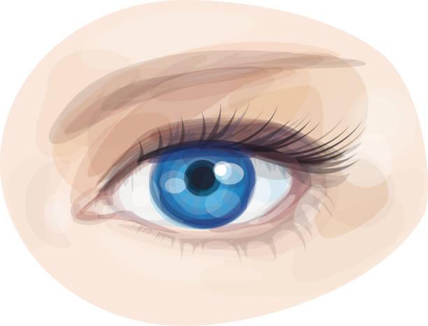 ilustraciones, imágenes clip art, dibujos animados e iconos de stock de vector de ojo azul hermosa mujer. - ojos azules