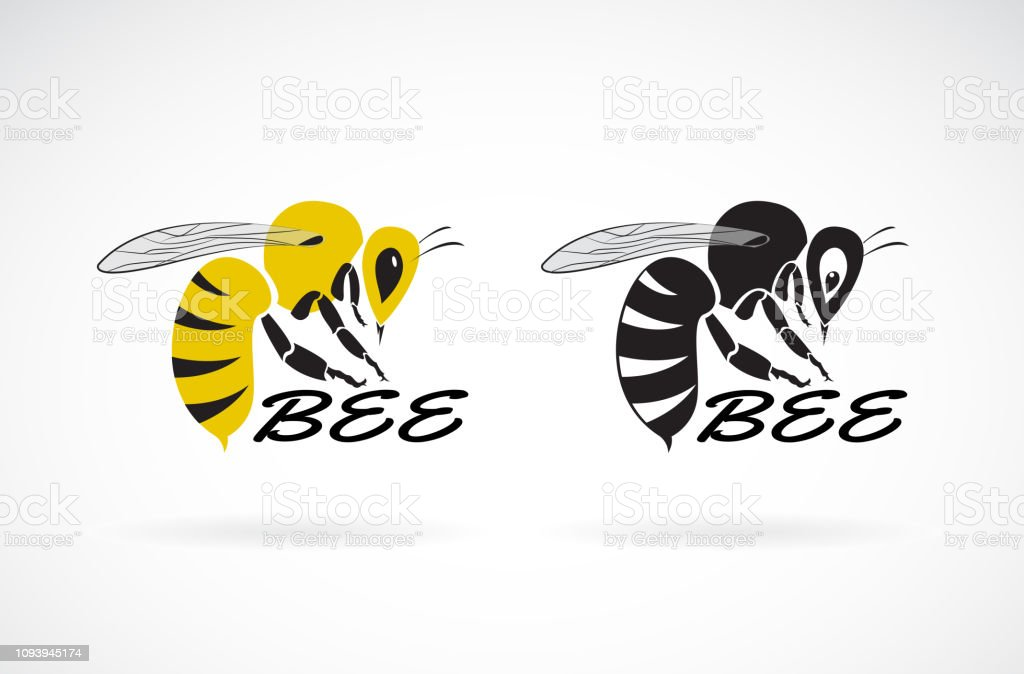 Vector of bee design on white background. Insect. Animals. Easy...
