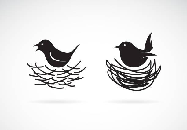bildbanksillustrationer, clip art samt tecknat material och ikoner med vektor av fågel och bon på vit bakgrund. vilda djur. lätt redigerbara lager vektorillustration. - bo