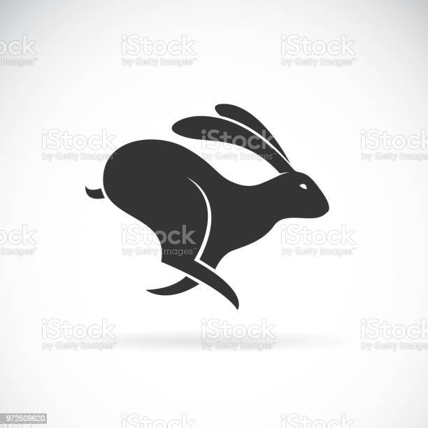 Vector of black rabbit is running on white background wild animals vector id972509620?b=1&k=6&m=972509620&s=612x612&h=o6nunvaj lf9kgj  pi3ec2ql8yjsk5ruikmu8oi4ni=
