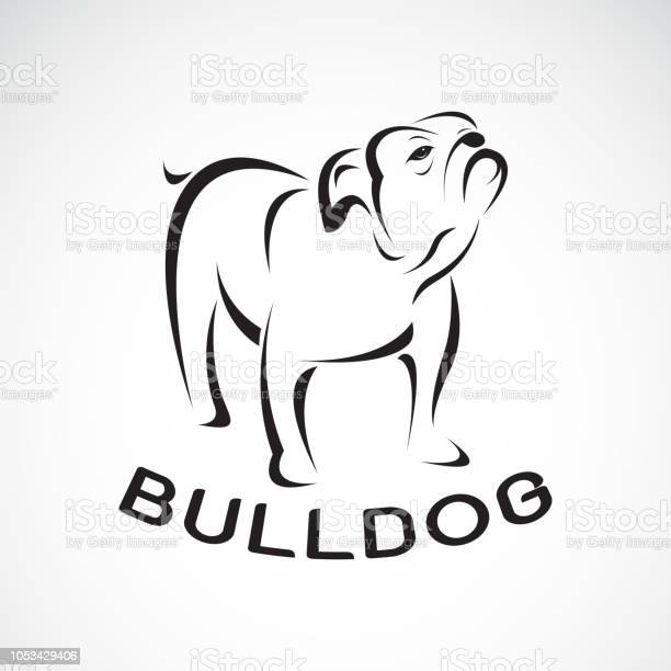 Vector of bull dog design on white background pet animal easy vector id1053429406?b=1&k=6&m=1053429406&s=612x612&h=d4sm7sl7f6gsdanoagzbgncyr9v aeembzfulmqrwdg=