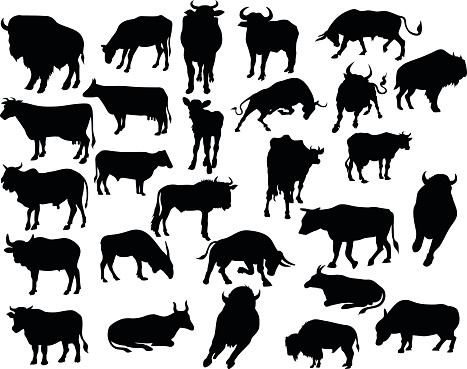 vector of bull silhouettes .