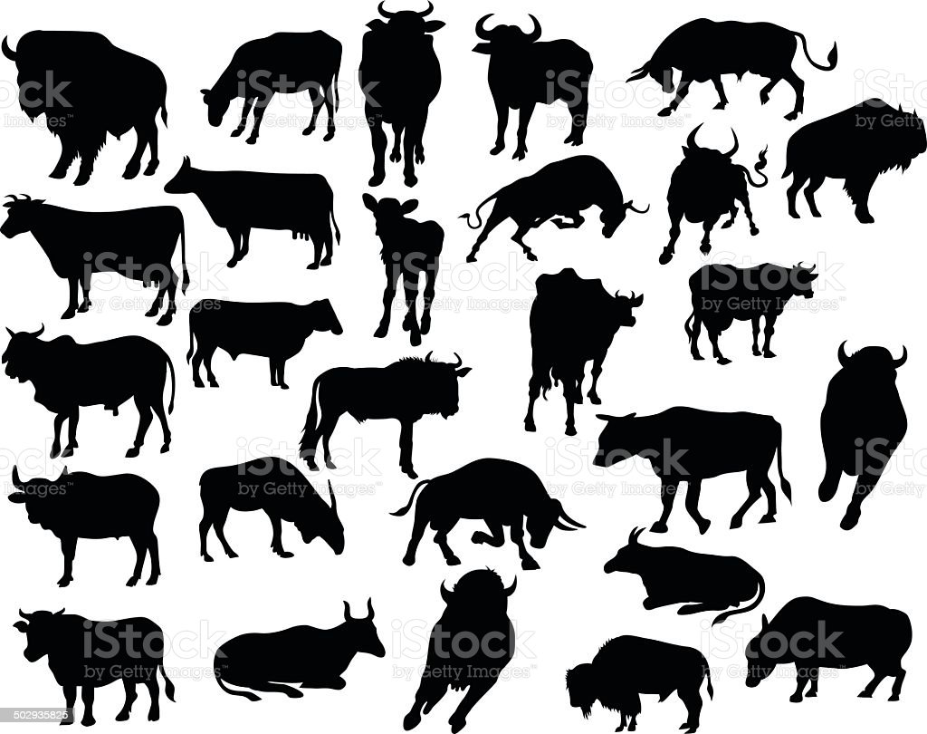 vector of bull silhouettes . vector art illustration