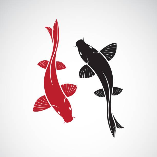 stockillustraties, clipart, cartoons en iconen met vector van karper koi vis geïsoleerd op witte achtergrond. huisdier. gemakkelijk bewerkbare gelaagde vector illustratie. - carp