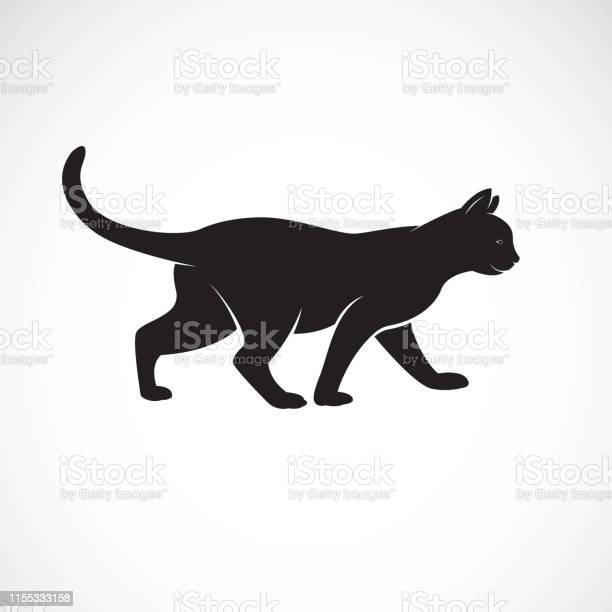 Vector of cat walking on a white background pet animals cat logo or vector id1155333158?b=1&k=6&m=1155333158&s=612x612&h=i2u korobyb h3gifmdpka7hqsg7aqt9aqlvrd5note=