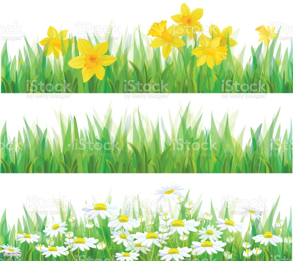 Vector of daffodil flowers, grass and chamomiles isolated. royalty-free stock vector art